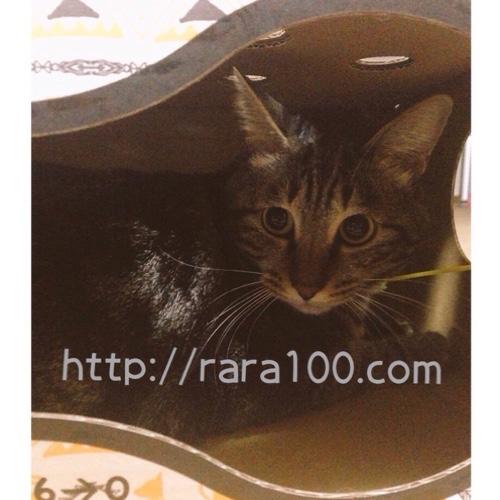 猫もぐらたたきBOX